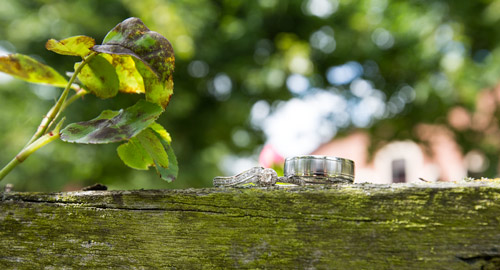 wedding and engagement rings on branch at buntwood hotel
