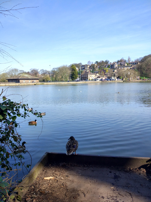 View from Newmillerdam country park over the dam with a duck in the foreground